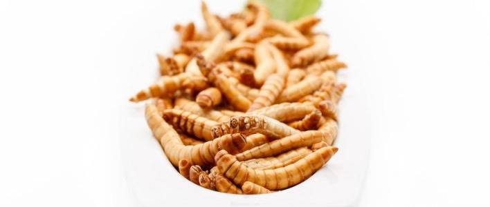 Les protéines d'insectes, une alternative aux protéines animales ?