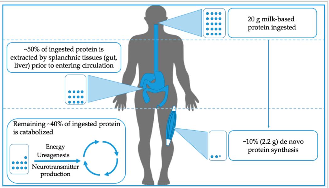 tableau protéines artible blog 2