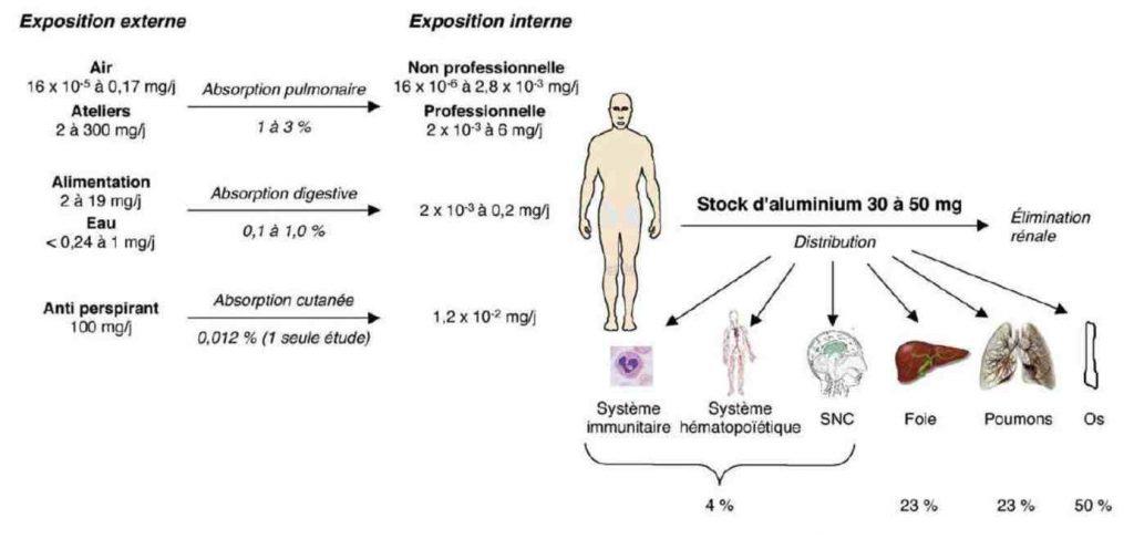 Absorption quotidienne et distribution de l'Al dans l'organisme humain d'après le conseil supérieur de la santé belge