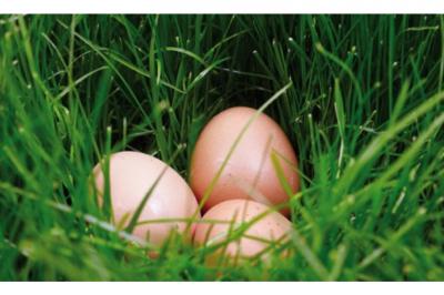 Environmental impact of eggs