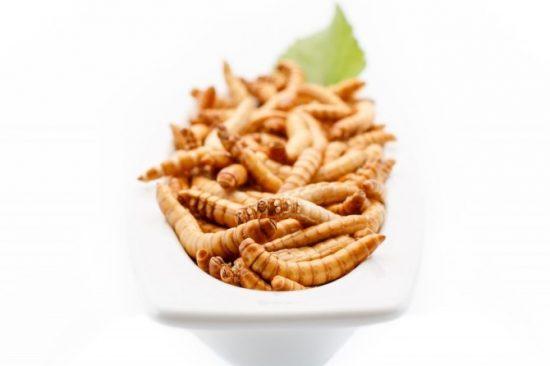 Les protéines d'insectes, une alternative aux protéines animales