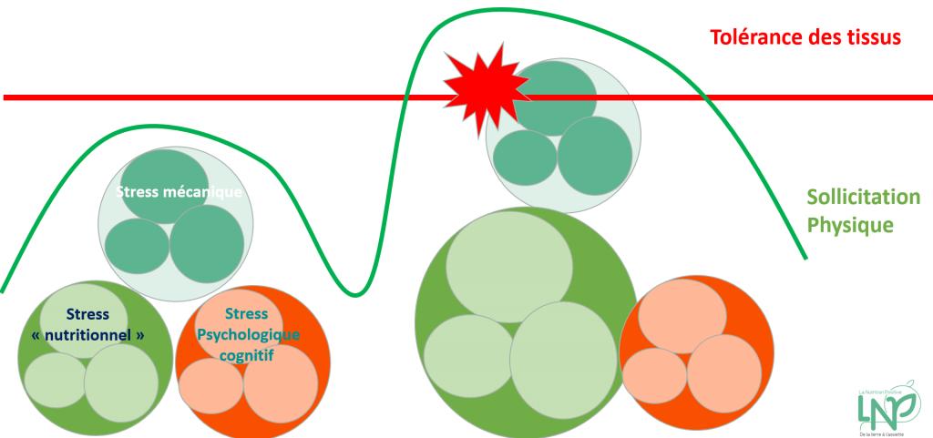 stress nutritionnel schéma tolérance tissu